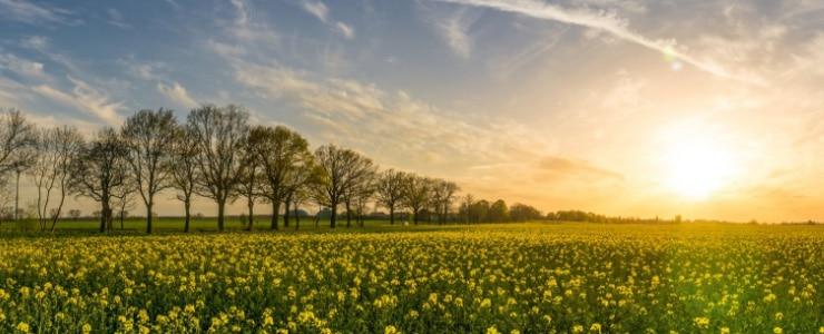 En estos meses de cambio, el sol daña más que nunca la vista por su posición más baja en el horizonte, por este motivo el uso de gafas de sol… Me Interesa